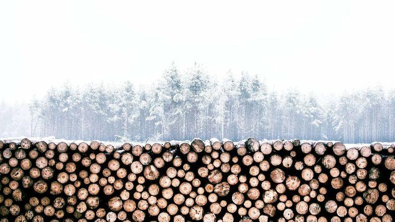 Kłody drewna